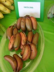 רישיון עסק פירות - בננה אדומה