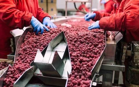 רישיון למפעל מזון
